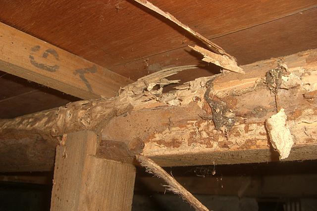 シロアリ被害例|シロアリ・羽アリ駆除なら白蟻奉行(しろありぶぎょう)